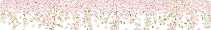 Selbstklebende Tapete Cars : Tapetenwelt ? selbstklebende Tapeten ? Blumen Bl?ten