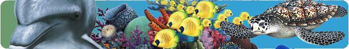 Selbstklebende Tapete Hello Kitty : Wandsticker ? Walls of the Wild ? Unterwasserwelt