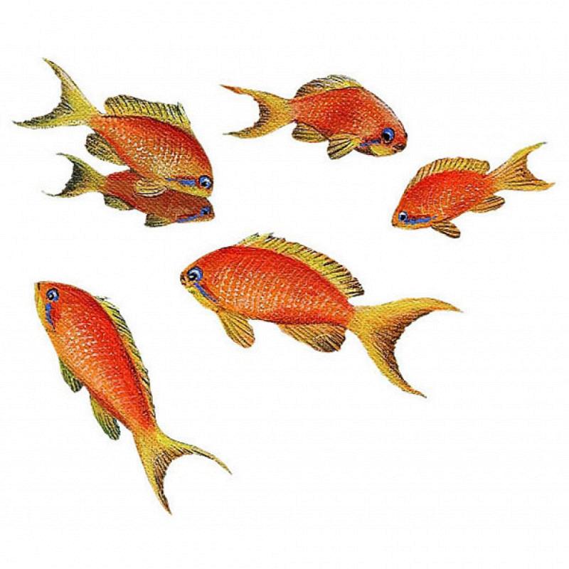 Wandsticker Wandtattoo Unterwasser Goldfisch