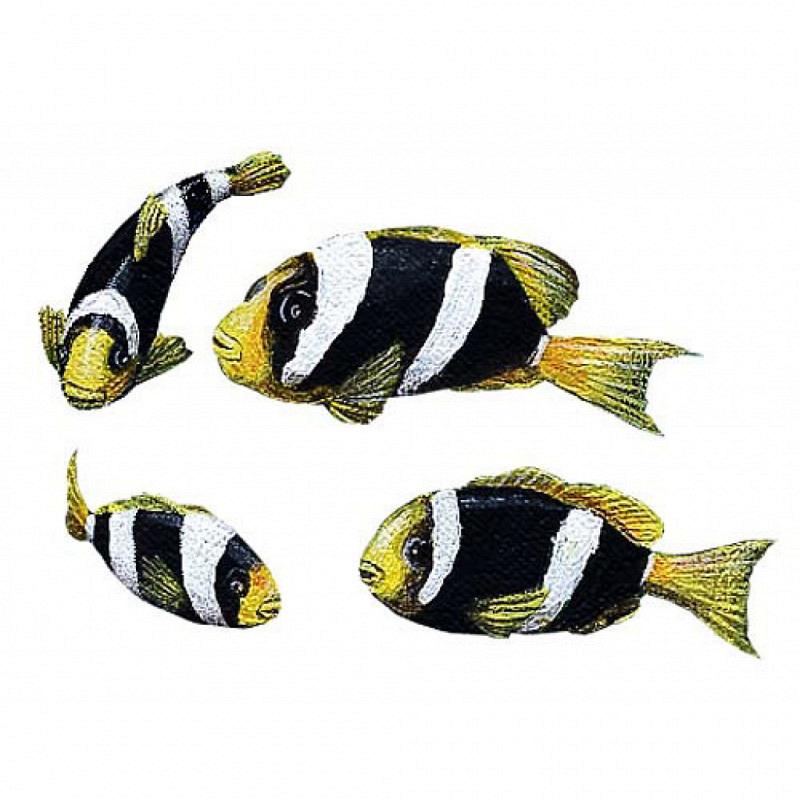 Wandsticker Gelbschwanz Clownfische