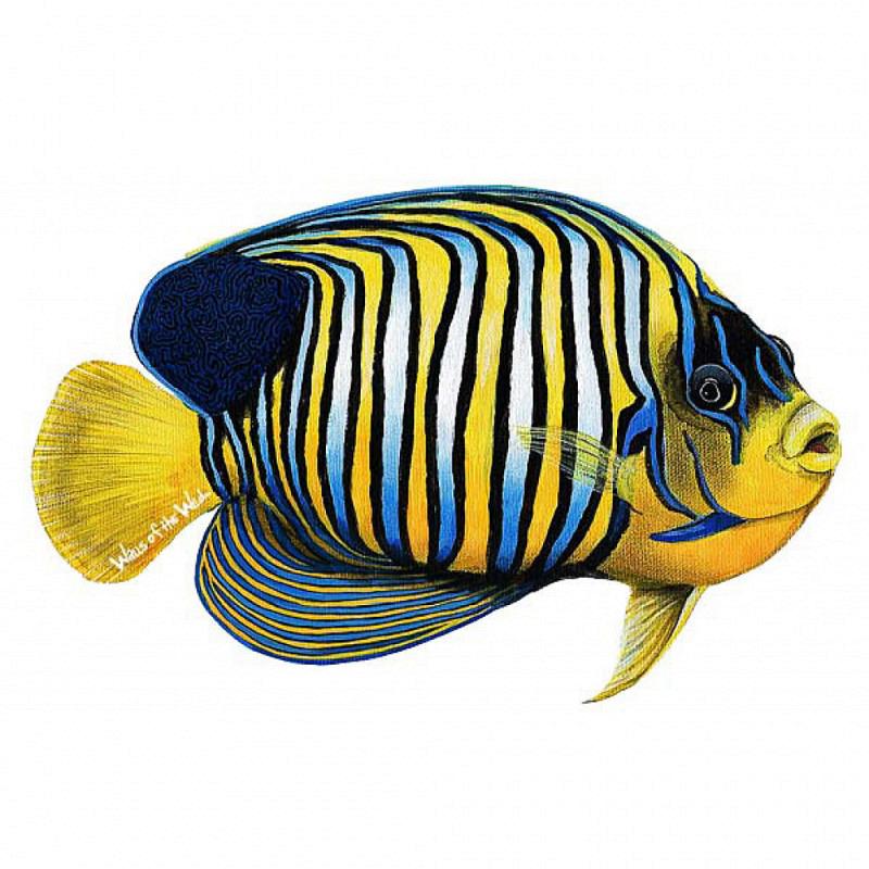 Wandsticker Wandtattoo Prachtkaiserfisch
