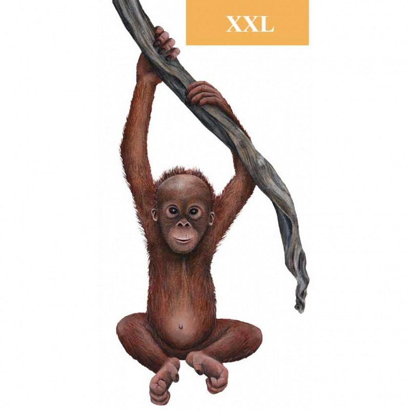 Wandsticker Regenwald Baby Orang Utan