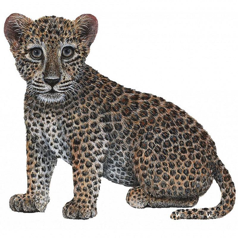Wandsticker Dschungel Regenwald Leopardenbaby