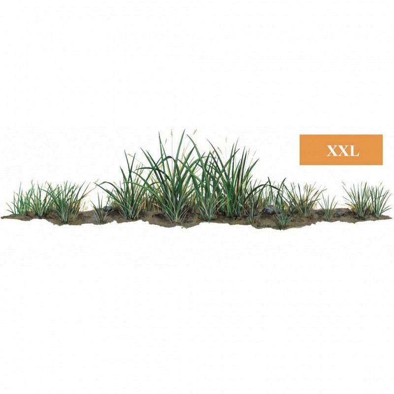 Wandsticker Dschungel Pflanze Gras