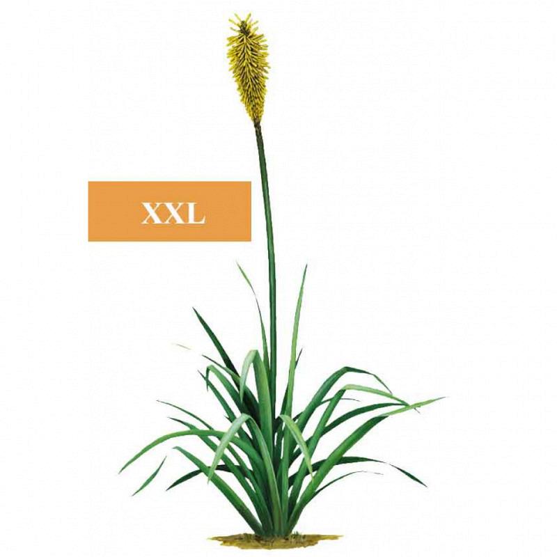Wandsticker Dschungel Regenwald gelbe Pflanze