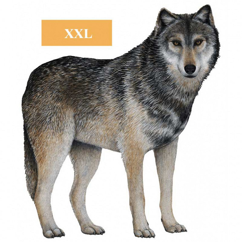 Wandsticker Dschungel Regenwald Wolf