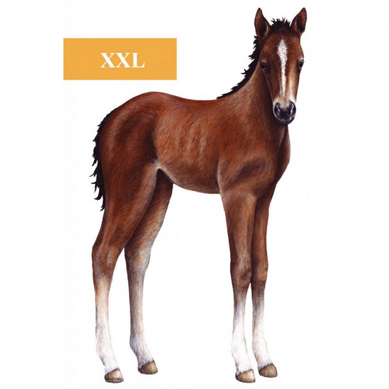 Wandaufkleber Wandsticker Pferd Fohlen