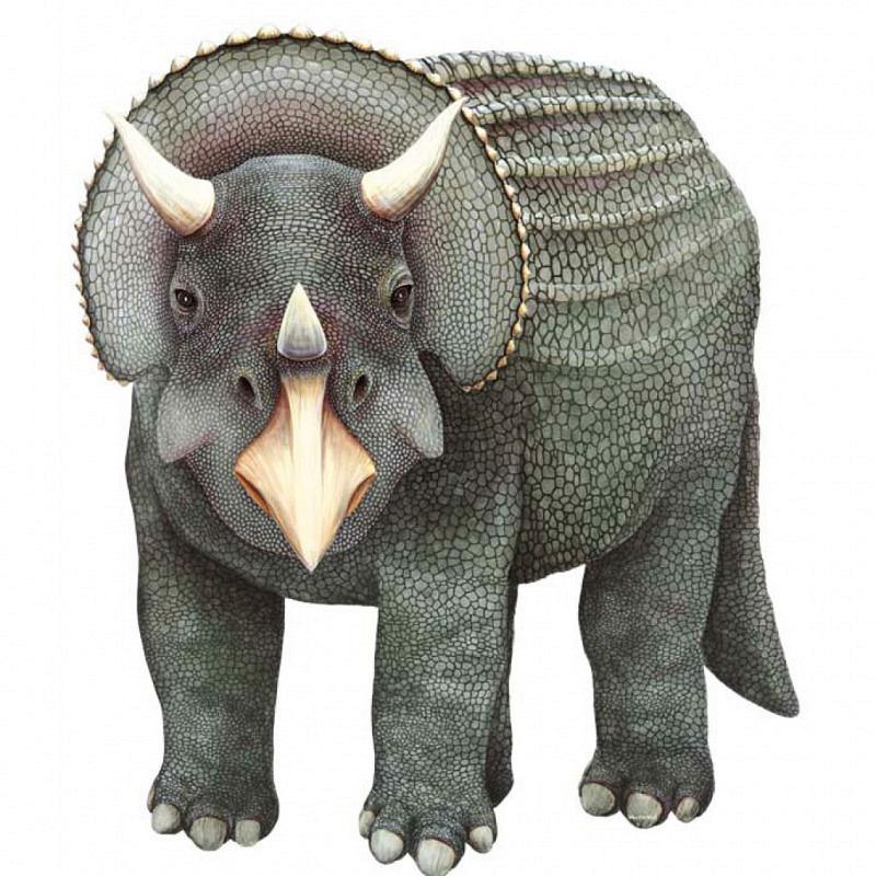Wandsticker Dinosaurier Triceratops grau
