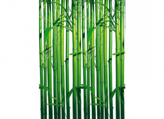 Fototapete Wandbild Bambuspflanzen