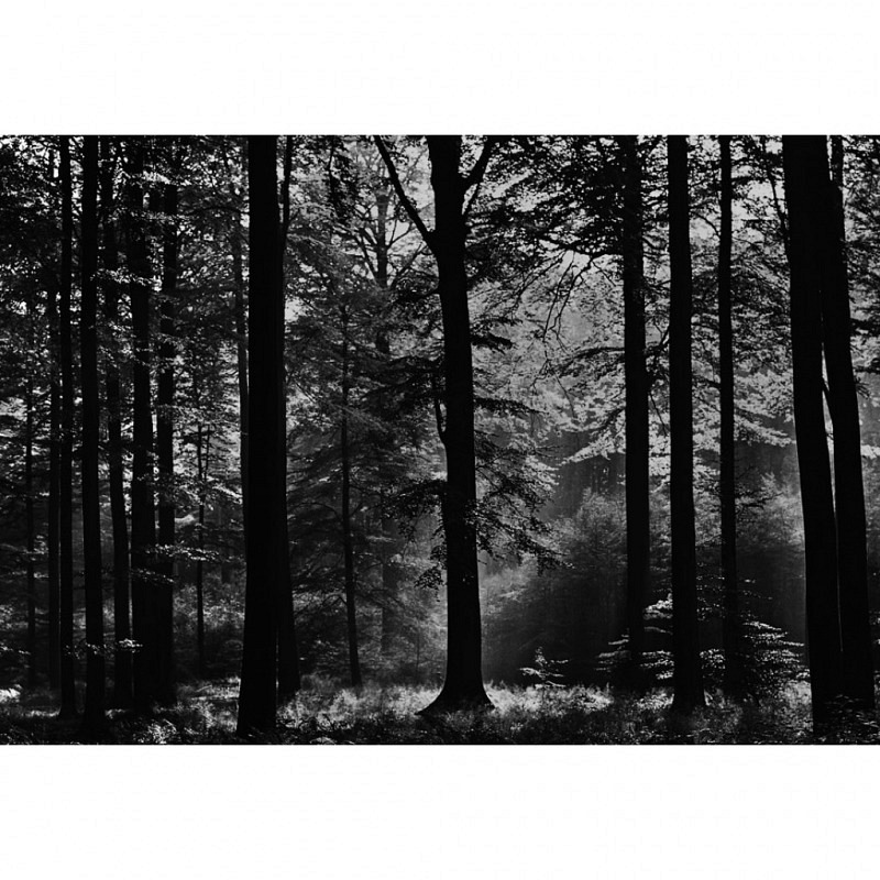 Wandbild Avalon nebliger Wald