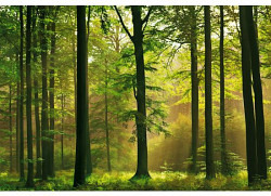 Fototapete Wandbild Herbstwald Bäume