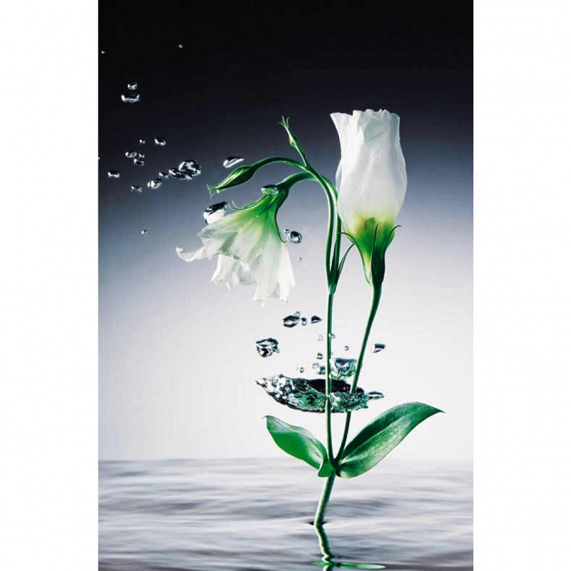 Wandbild Poster Kristallblume