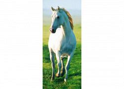 Türtapete Türposter weißes Pferd