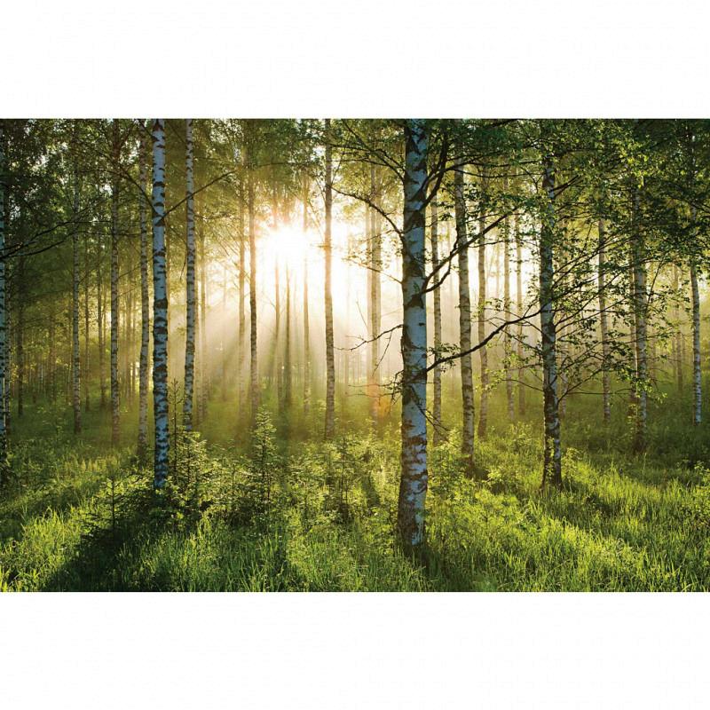 Wandbild Waldspaziergang Birkenwald