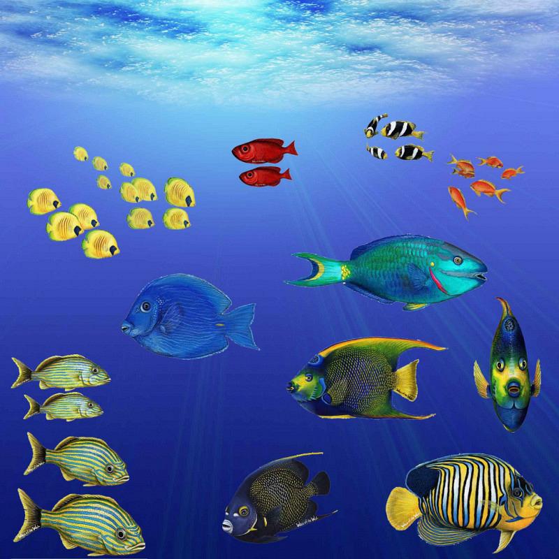 Wandsticker tropische Fische Collection