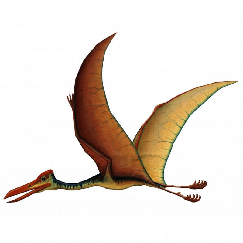 Wandsticker Quetzalcoatlus klein