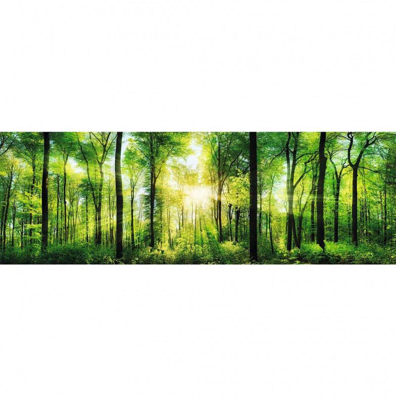 Wandbild Sommerwald Panorama