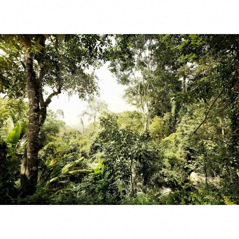 Vlies Fototapete Dschungel