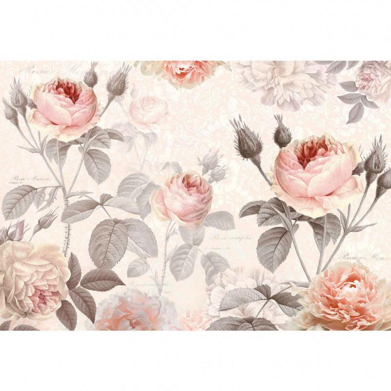 Vlies Fototapete Aquarell Rose