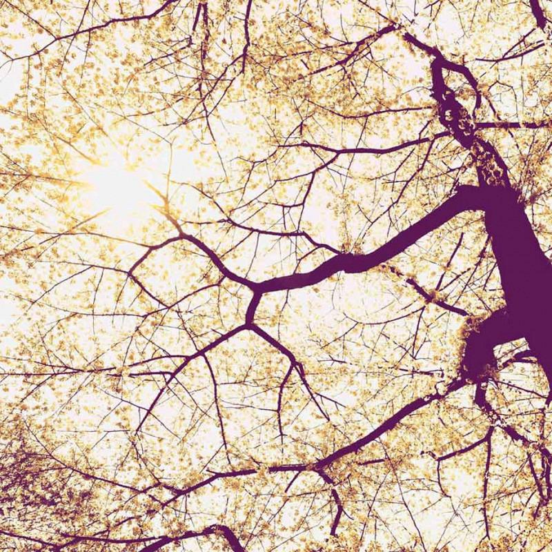 Vlies Fototapete Baumkrone Sonnenschein