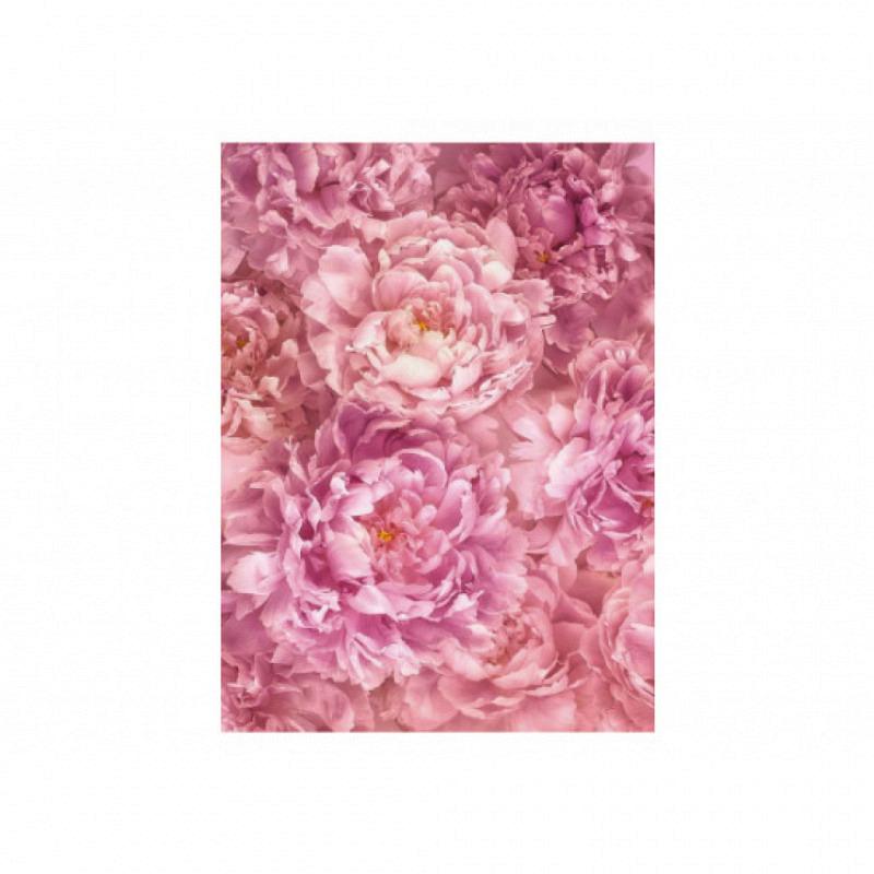 Vlies Fototapete rosa Blütenpracht