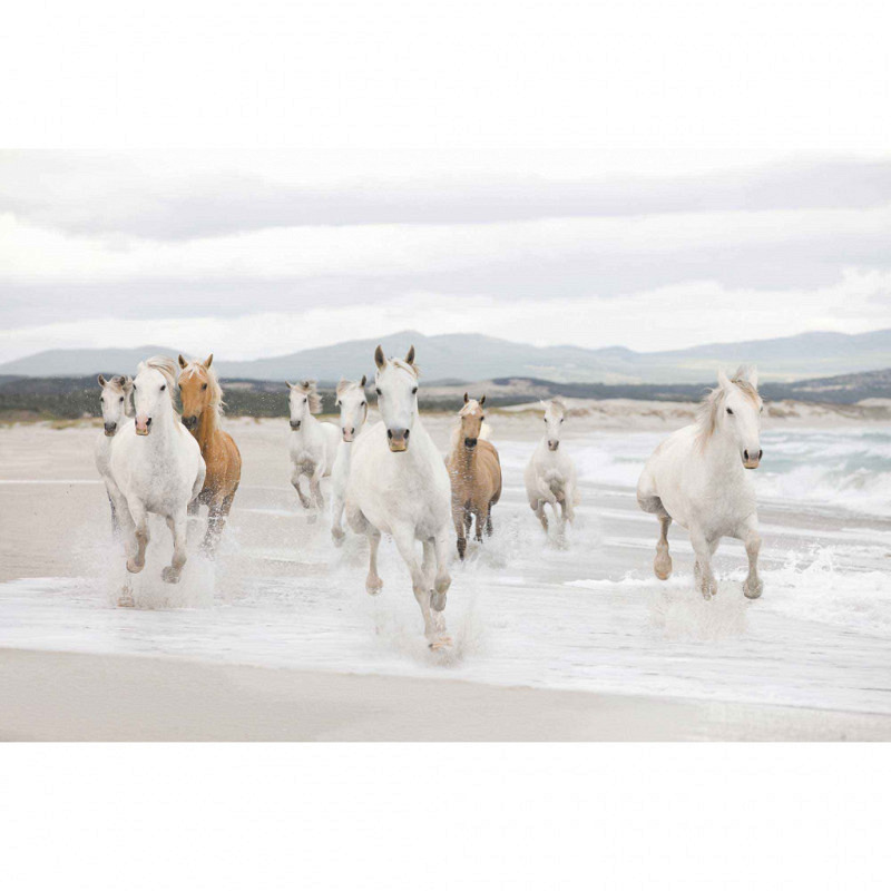 Fototapete weiße Pferde