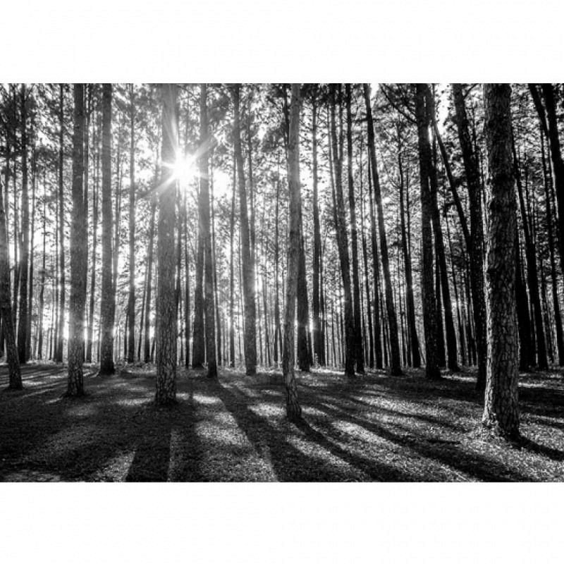 Fototapete Waldrand Licht und Schatten
