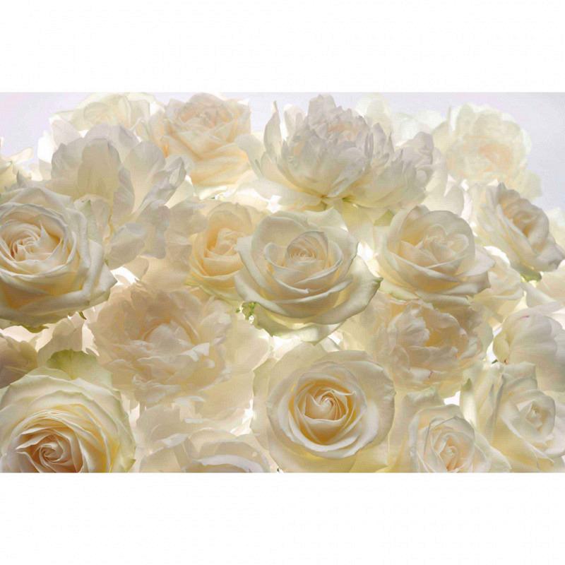 Vlies Fototapete weiße Rosen