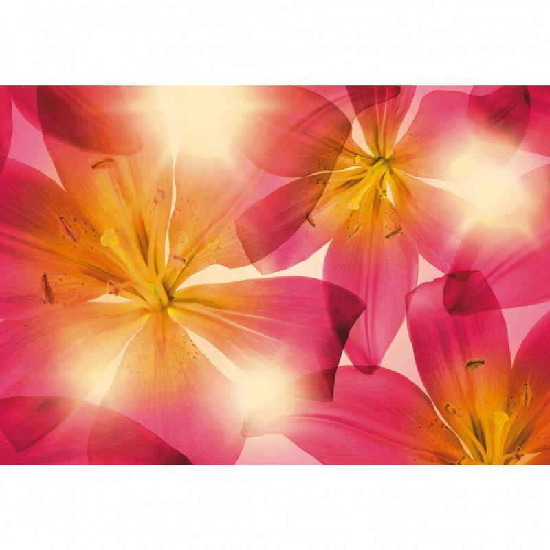 Fototapete Blüten Sommer Sonne
