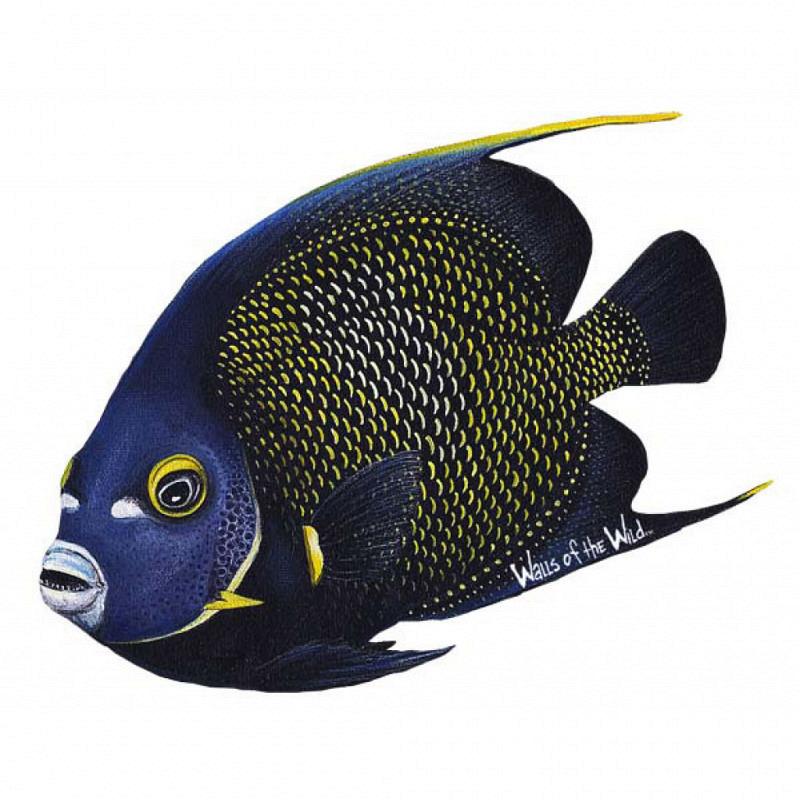 Wandsticker Wandtattoo Franzosen Kaiserfisch