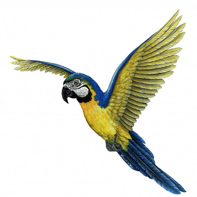 Wandsticker Dschungel Regenwald Papagei Ara