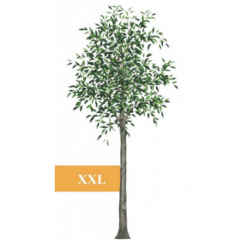 Wandsticker Dschungel Savanne Baum