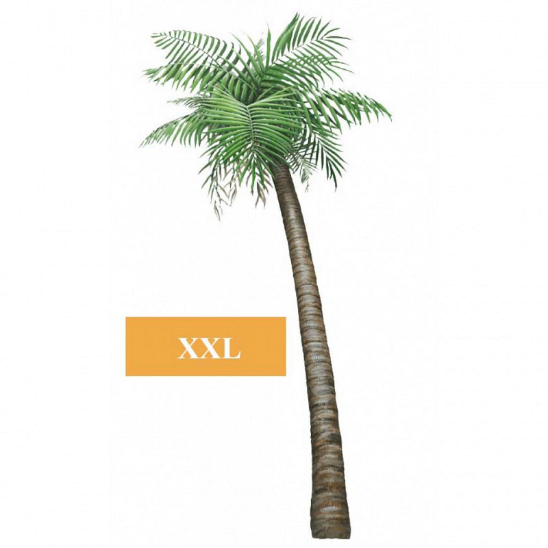 Wandsticker Dschungel Regenwald Pflanze Palme klein