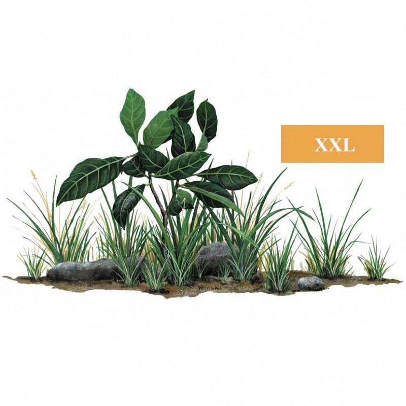 Wandsticker Pflanze Gras Laub und Steine