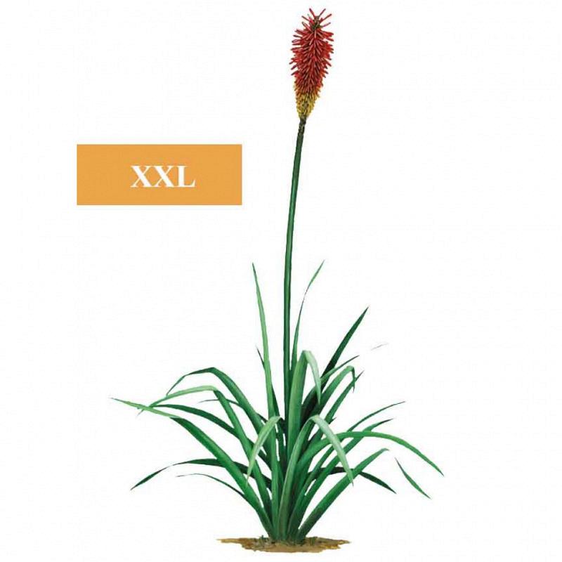 Wandsticker Dschungel Regenwald rote Pflanze