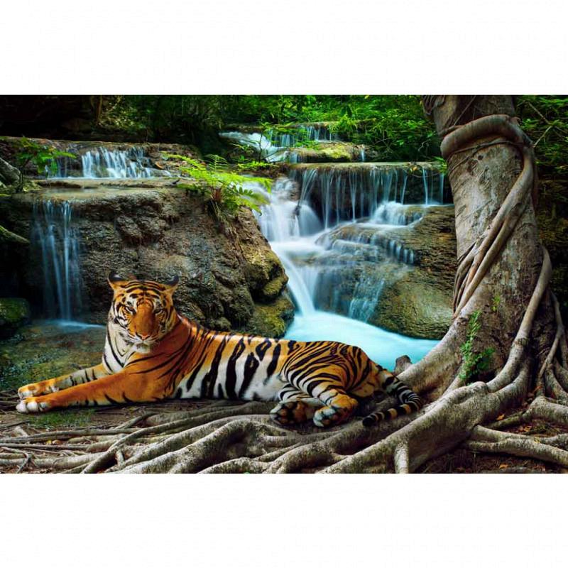 Fototapete Dschungelkatze Tiger