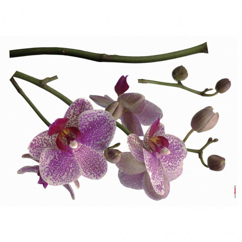 Wandsticker Orchidee violett