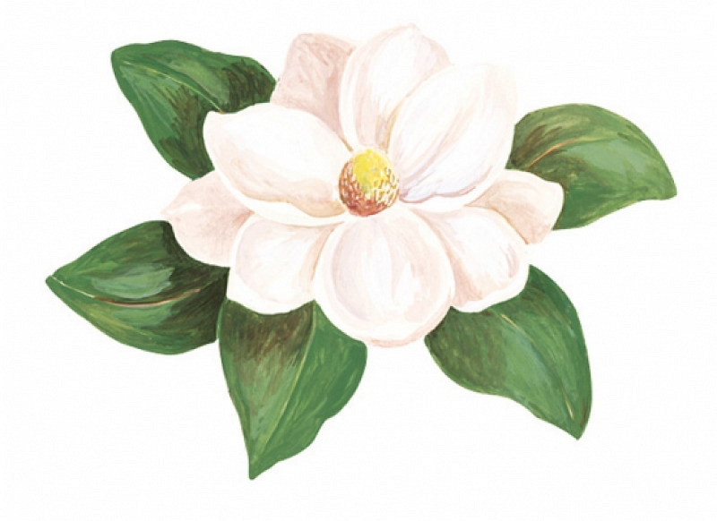 Wandsticker Blumen Magnolie Wallies