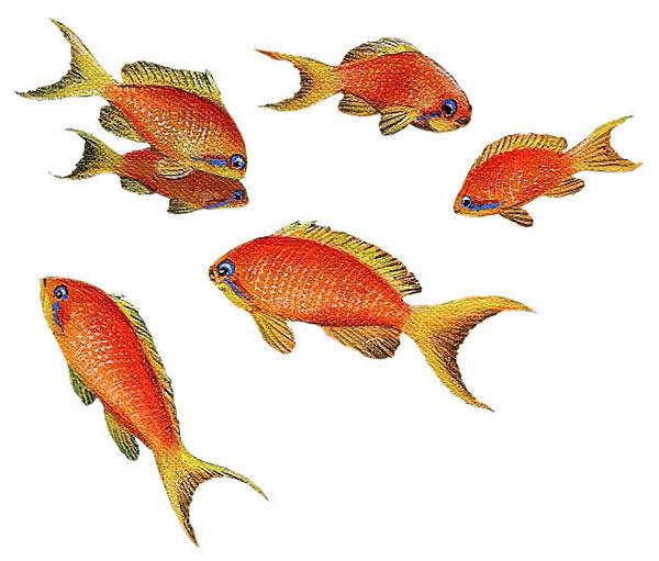 Wandaufkleber wandsticker wandtattoo unterwasser goldfisch for Deko fische plastik