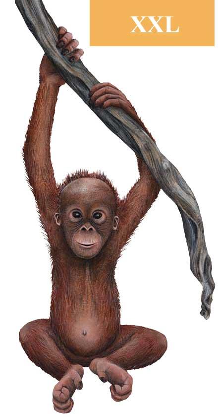 Walls of the Wild Wandsticker Baby Orang-Utan