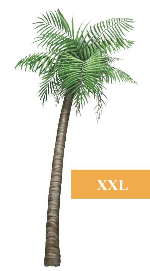 wandsticker dschungel regenwald pflanze palme pflanzen. Black Bedroom Furniture Sets. Home Design Ideas