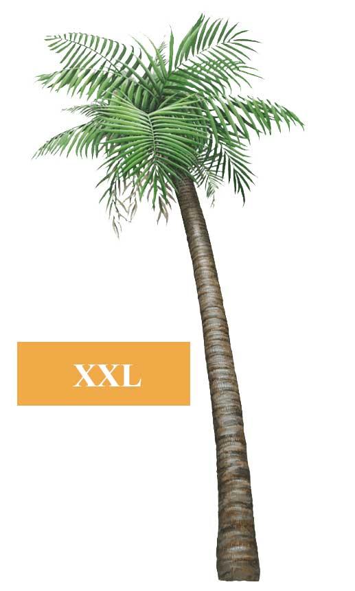 wandsticker dschungel regenwald pflanze palme klein pflanzen. Black Bedroom Furniture Sets. Home Design Ideas