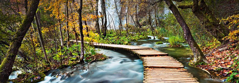 Fototapete waldweg  Fototapete Wandbild Waldweg-Fototapete 4 Teile