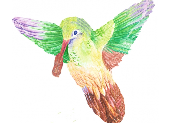wandsticker wandtattoo wallies vogel kolibris wohnzimmer. Black Bedroom Furniture Sets. Home Design Ideas