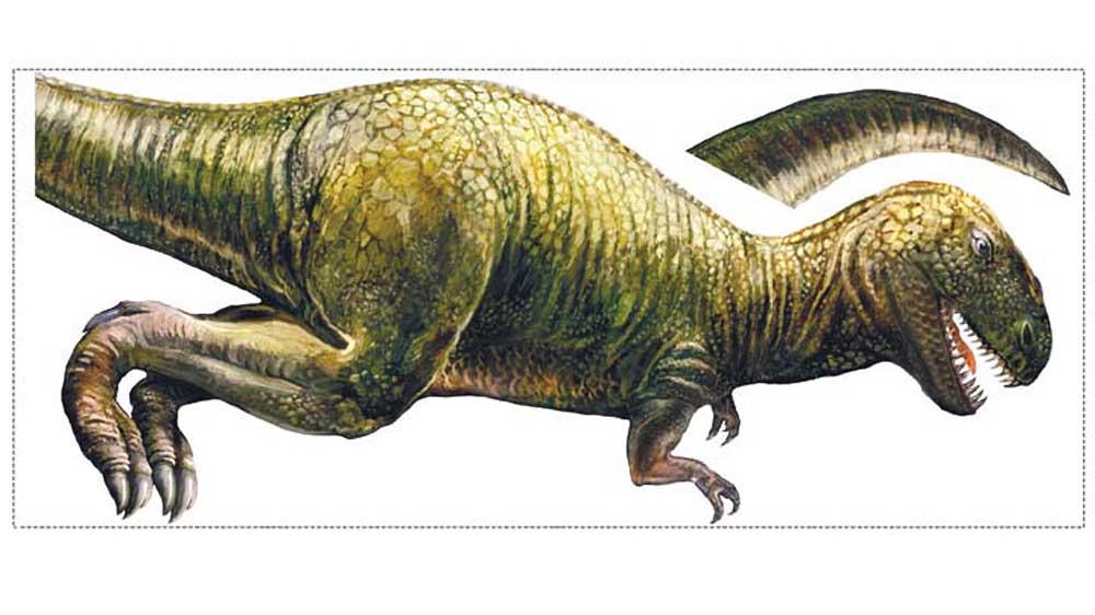 Roommates wandsticker dinosaurier t rex kinderzimmer - Wandtattoos dinosaurier ...